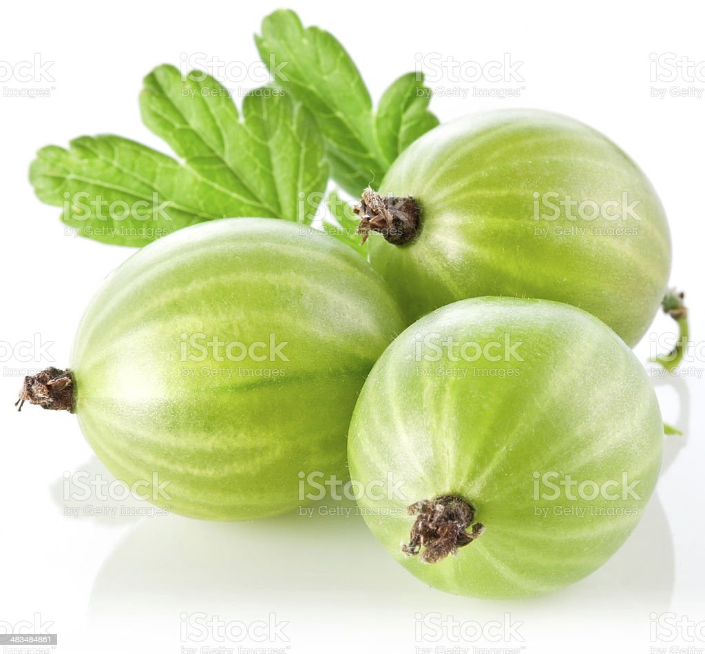Gooseberries with leaves. stock photo