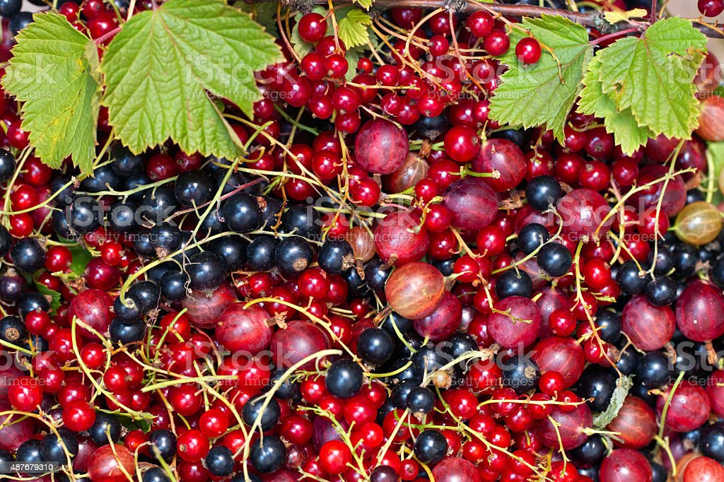 Gooseberry and currant on a table stock photo