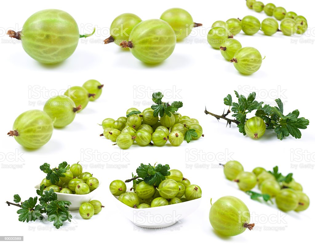gooseberry collection royalty-free stock photo