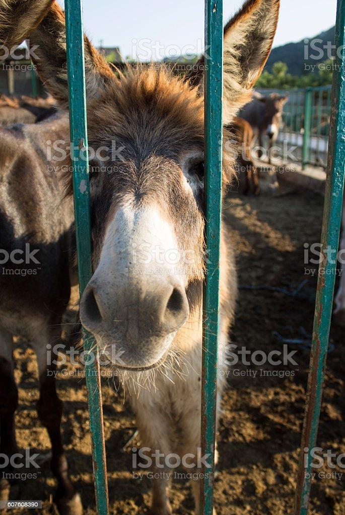 Gopher on the farm. Crimea stock photo