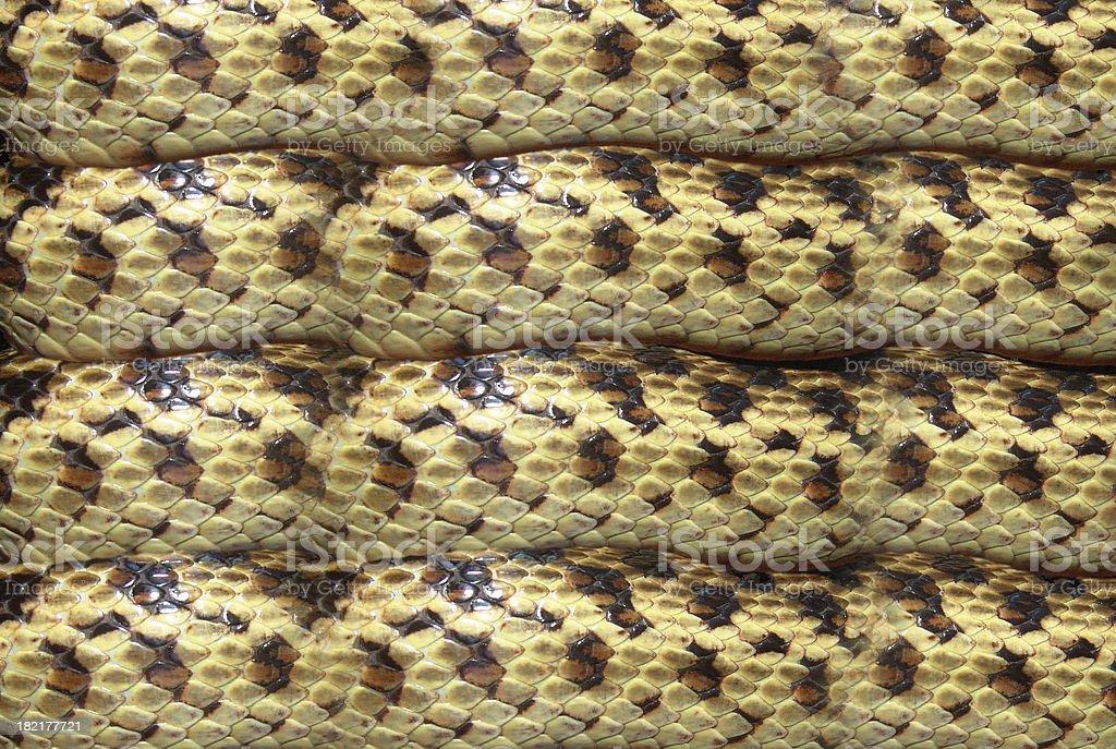 Gopher Snake Pattern stock photo