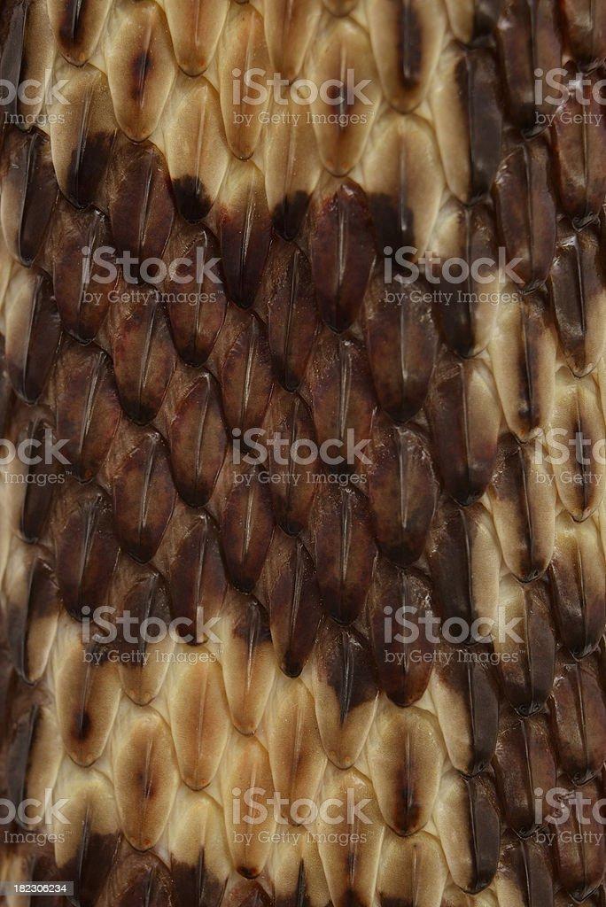 Gopher Snake Texture stock photo