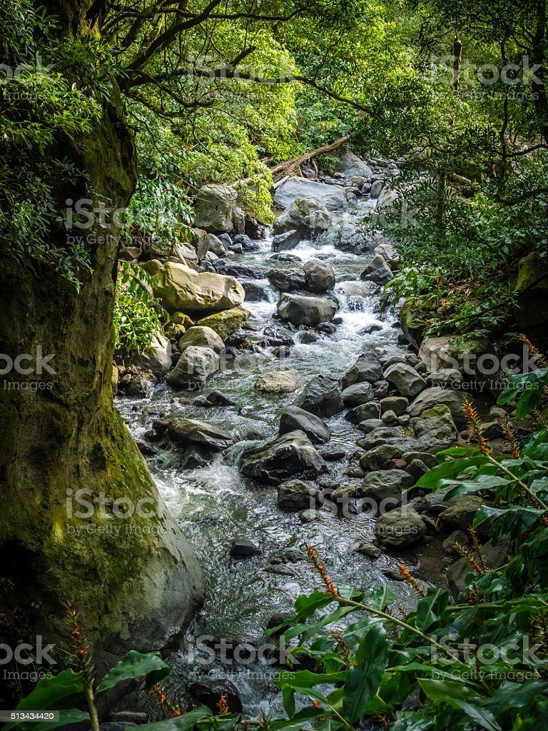 Gorge river stock photo