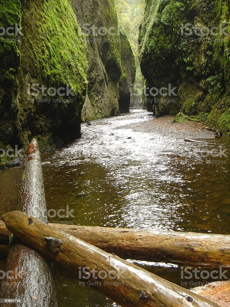 Gorge with Fallen Trees and Mossy Rocks royalty-free stock photo