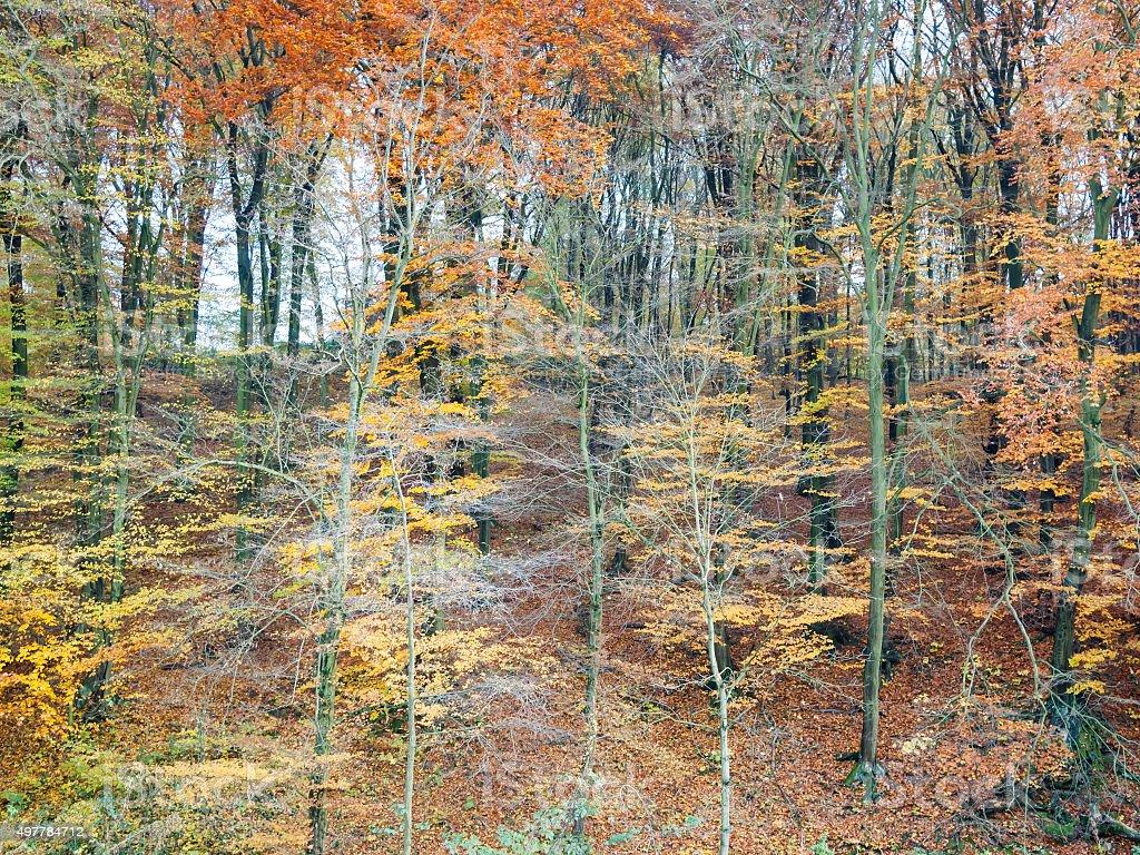 Gorgeous autumn forest landscape stock photo