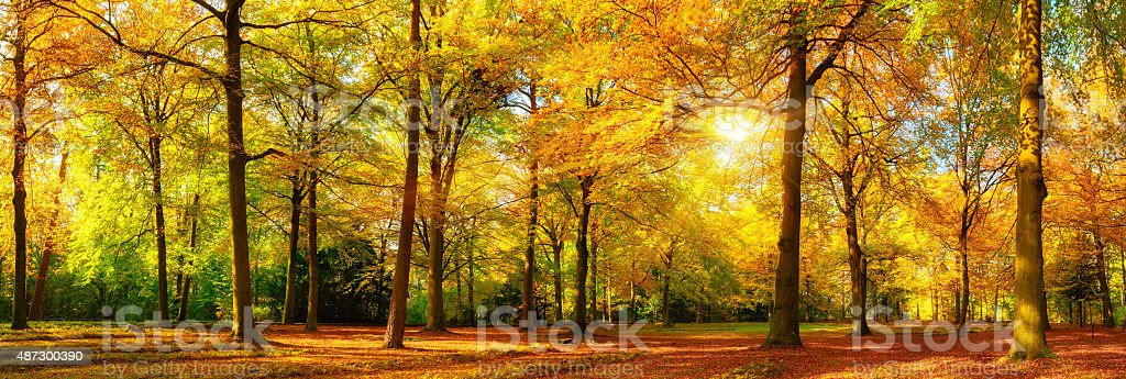 Gorgeous autumn panorama of a sunny forest stock photo