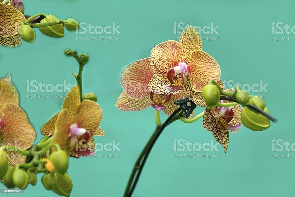 Gorgeous Crotons stock photo