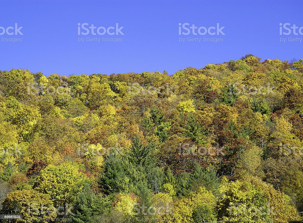 gorgeous fall colors in the mountains royalty-free stock photo