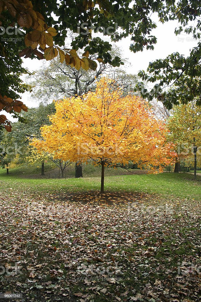 Gorgeous Fall in New York City - Golden Arbor royalty-free stock photo