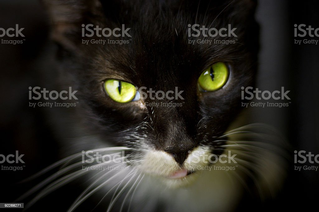 gorgeous green cat eyes stock photo