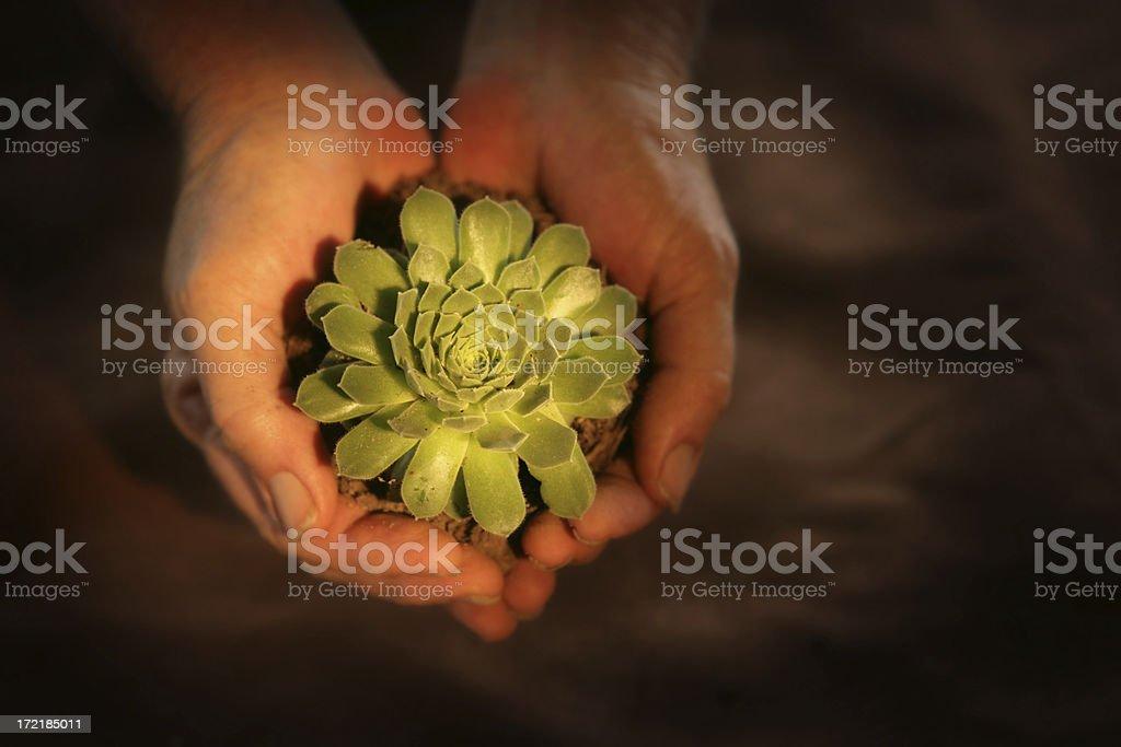 Gorgeous Plant royalty-free stock photo