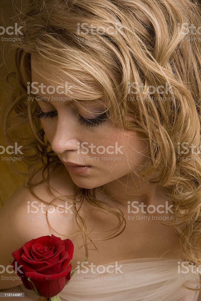 Gorgeous rose royalty-free stock photo