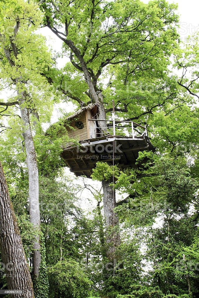 gorgeous treehouse in green tree - house in a tree stock photo
