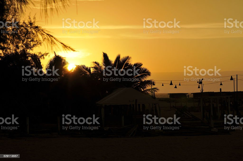 Gorgeous yellow sunset between trees royalty-free stock photo