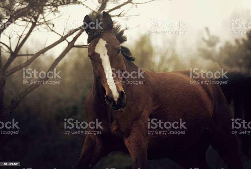 gorgeous, young, healthy, and happy riding a wild horse running stock photo