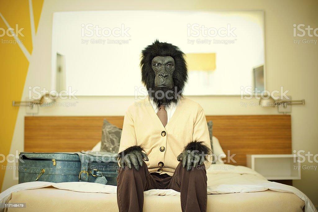 Gorilla Business Man in Hotel Room stock photo