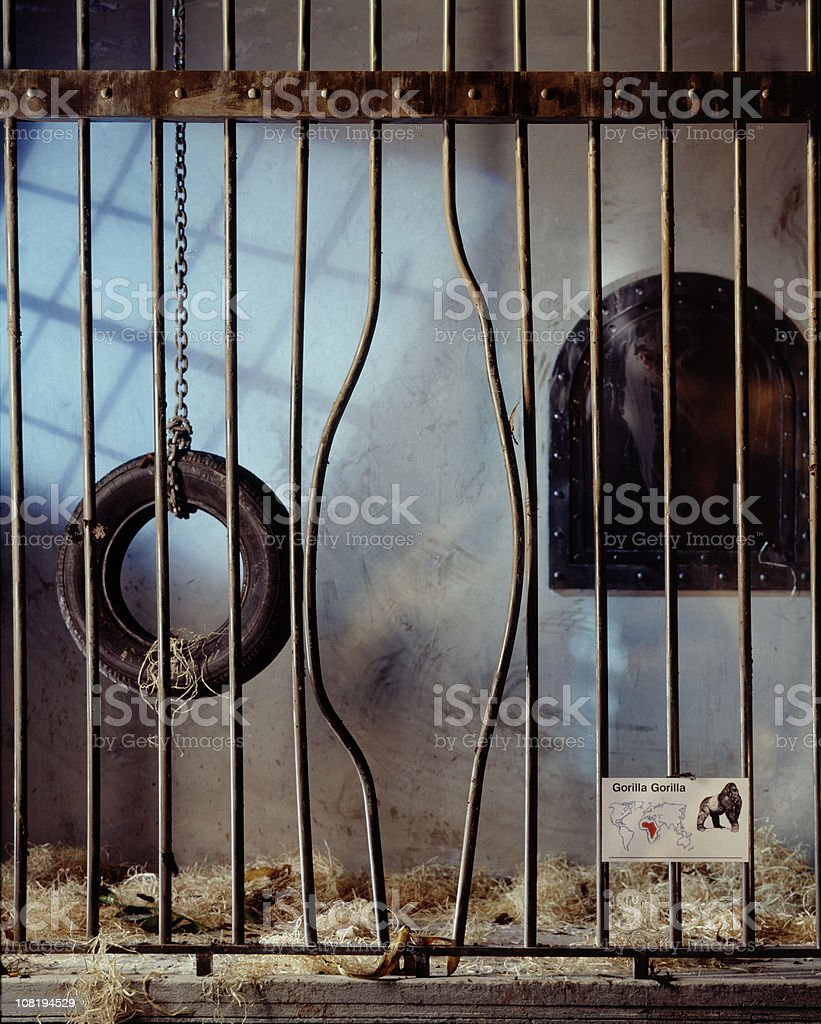 Gorilla Cage with Bent Bars stock photo