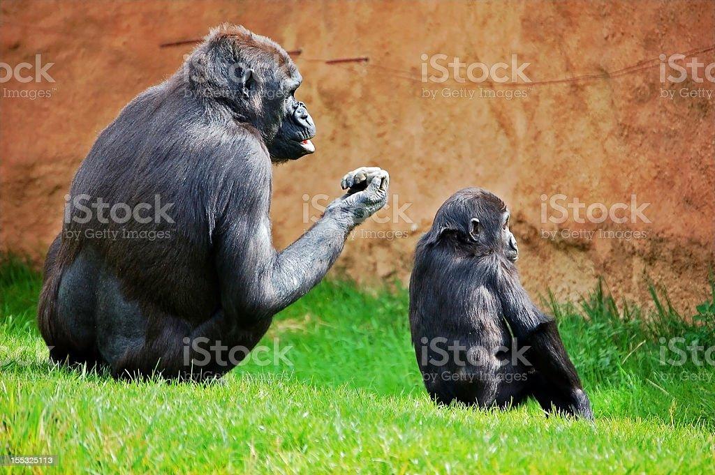 Gorilla family royalty-free stock photo
