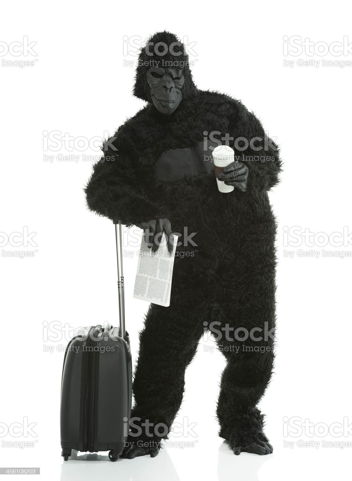 Gorilla holding disposable coffee cup royalty-free stock photo