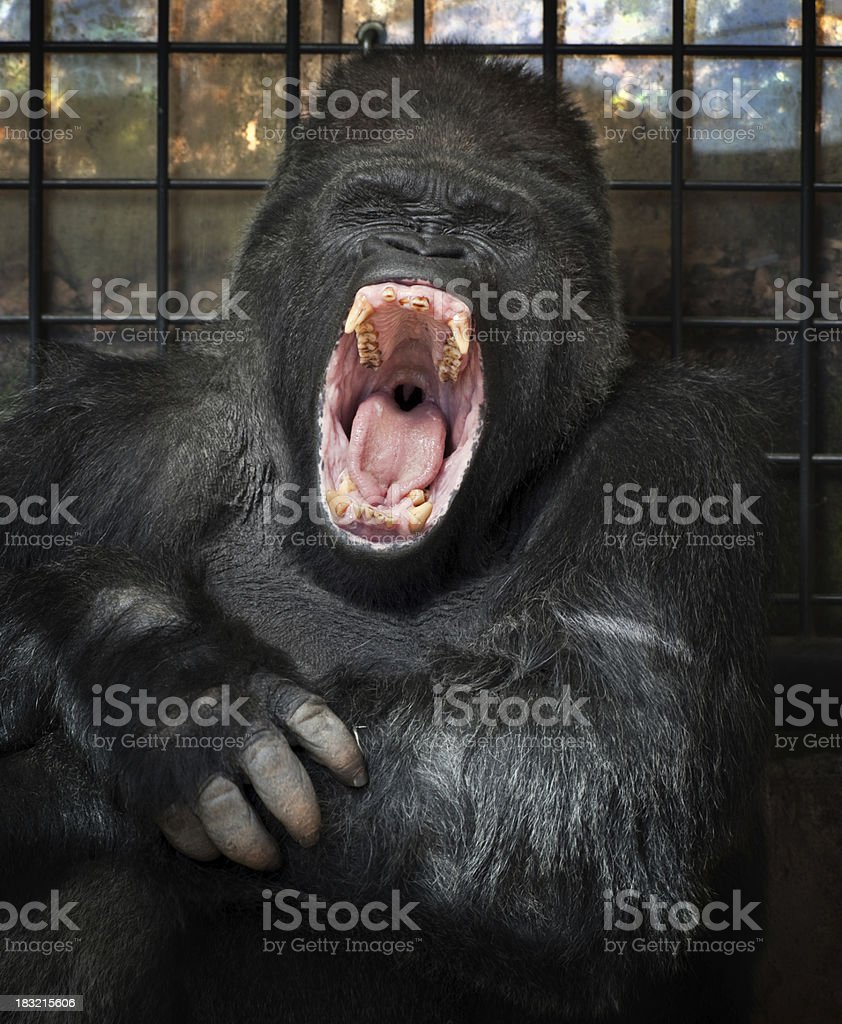 Gorilla In Prison stock photo
