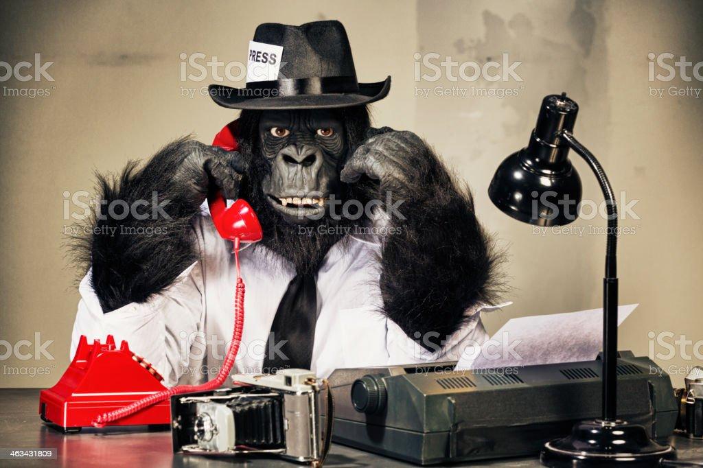 Gorilla Journalist stock photo