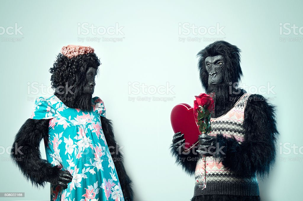 Gorilla Man Giving Valentines Day Gifts stock photo