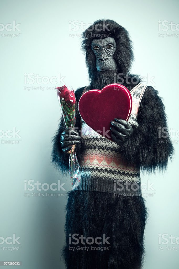 Gorilla Man with Valentines Day Gifts stock photo