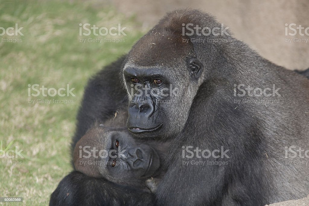 Gorilla Mother and Child royalty-free stock photo