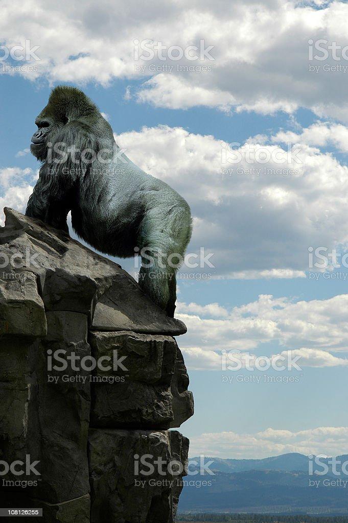 gorilla on rocks royalty-free stock photo
