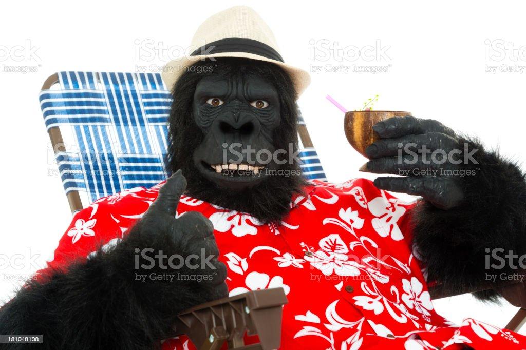 Gorilla on Vacation royalty-free stock photo