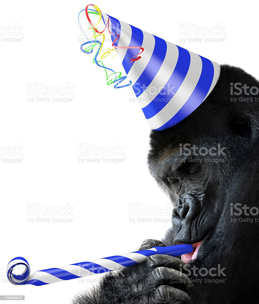 Gorilla party animal wearing a striped birthday hat stock photo