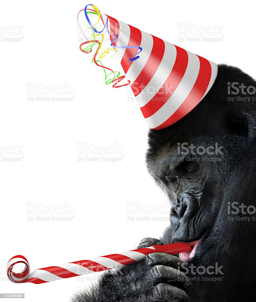 Gorilla party animal with a birthday hat and noisemaker horn stock photo