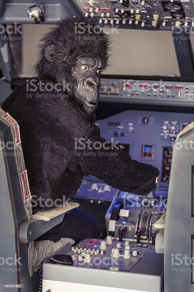 Gorilla Piloting an Airplane royalty-free stock photo