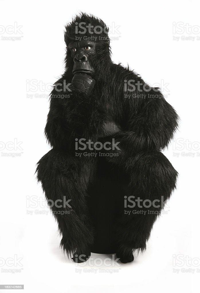 Gorilla Thinking royalty-free stock photo