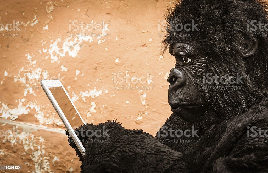 Gorilla with Tablet stock photo
