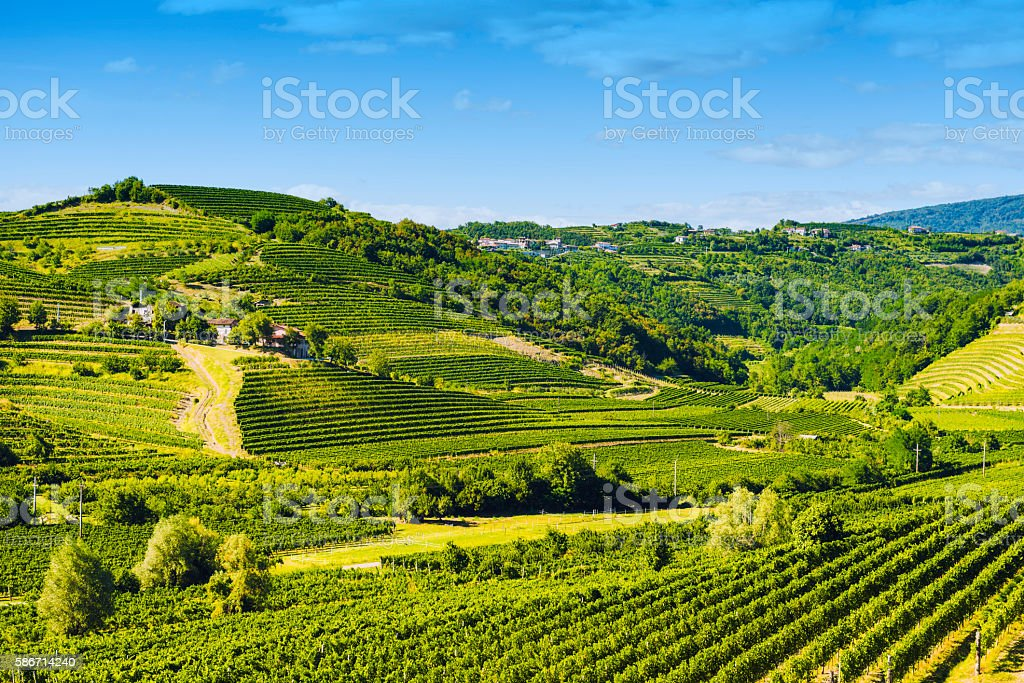 Goriska Brda vineyard landscape stock photo