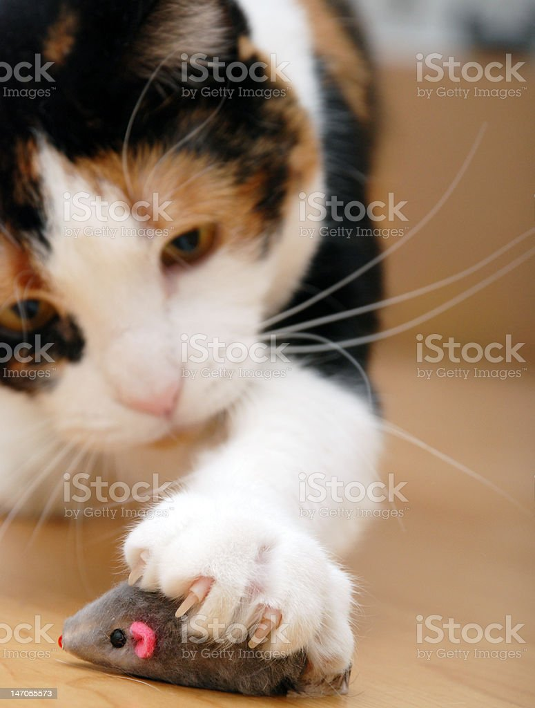 got you! stock photo