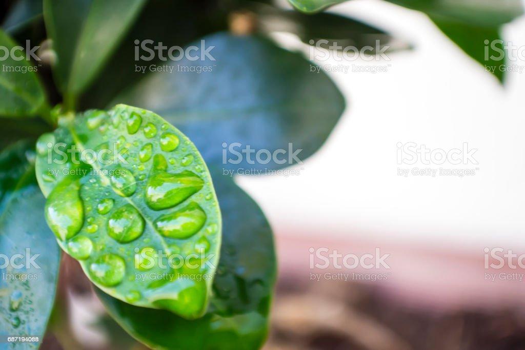 gotas de agua en hoja stock photo