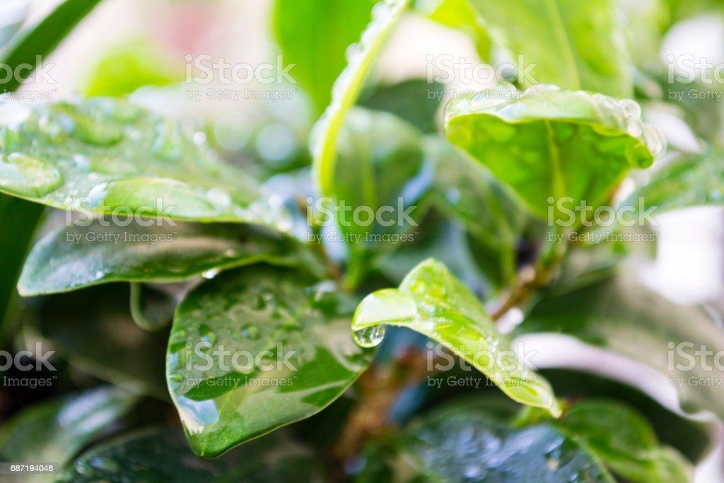 gotas de agua stock photo