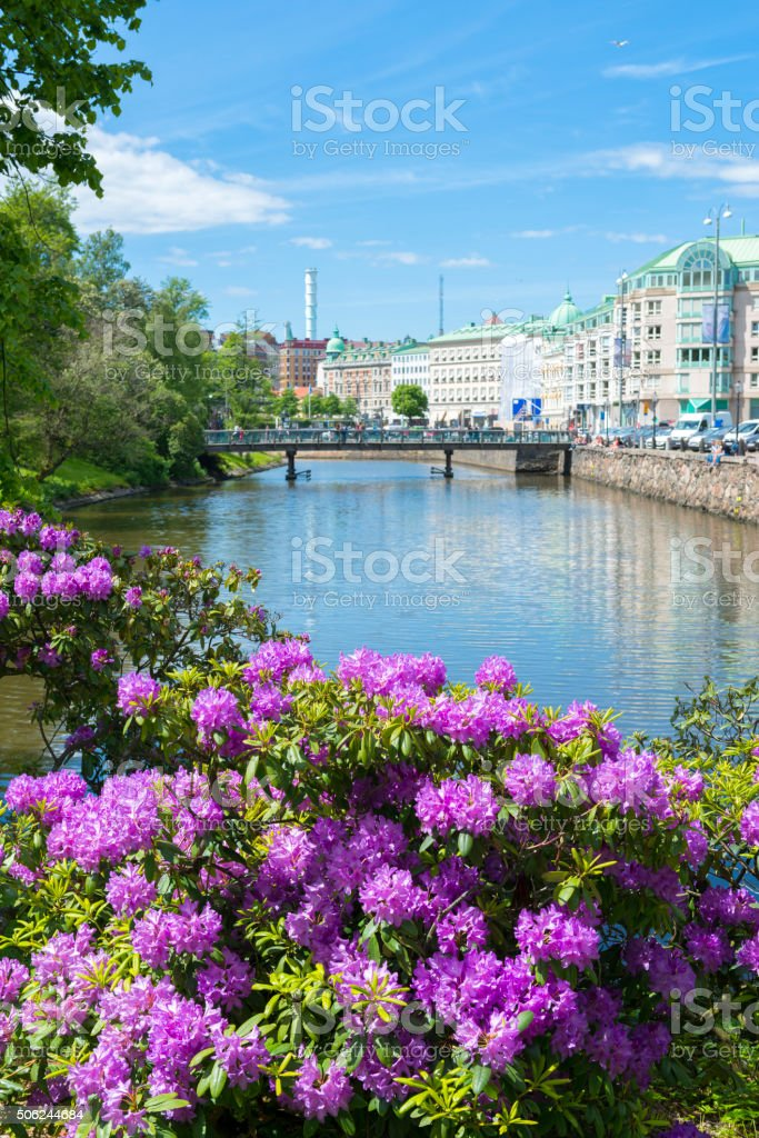 Gothenburg city Rhododendron stock photo