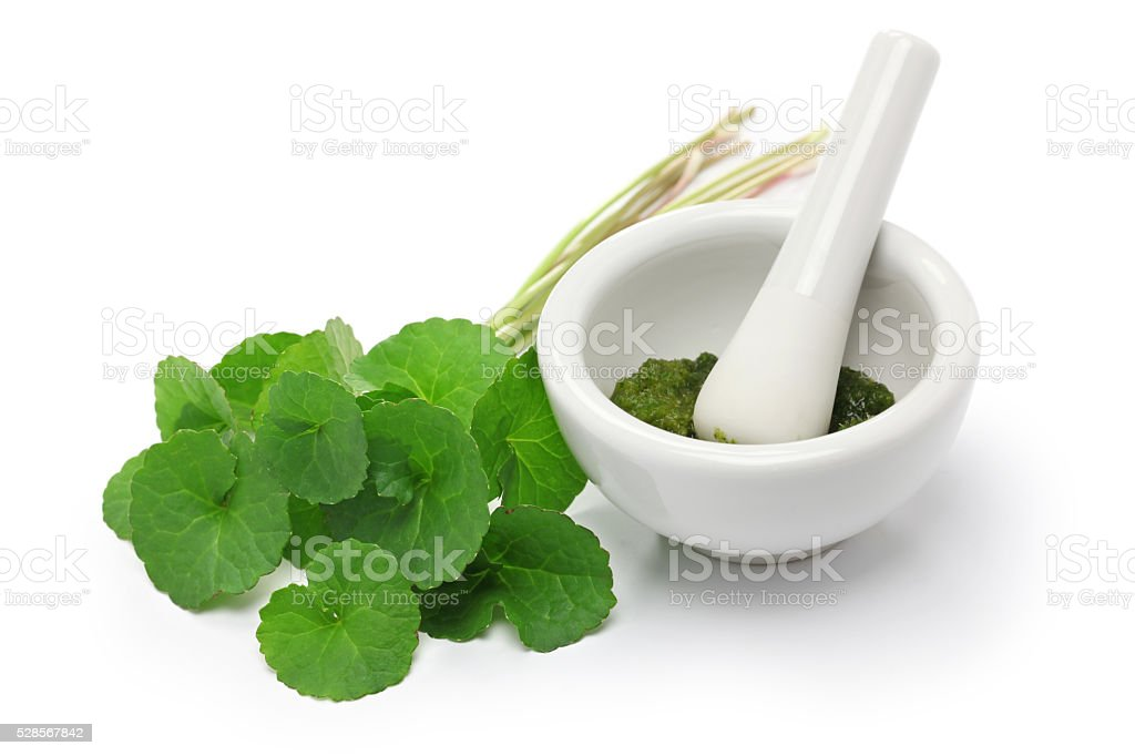 gotu kola, asiatic pennywort stock photo