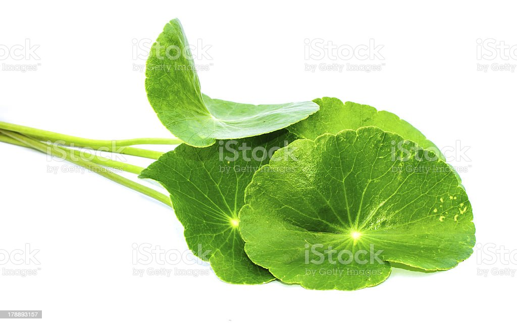 gotu kola leaves royalty-free stock photo