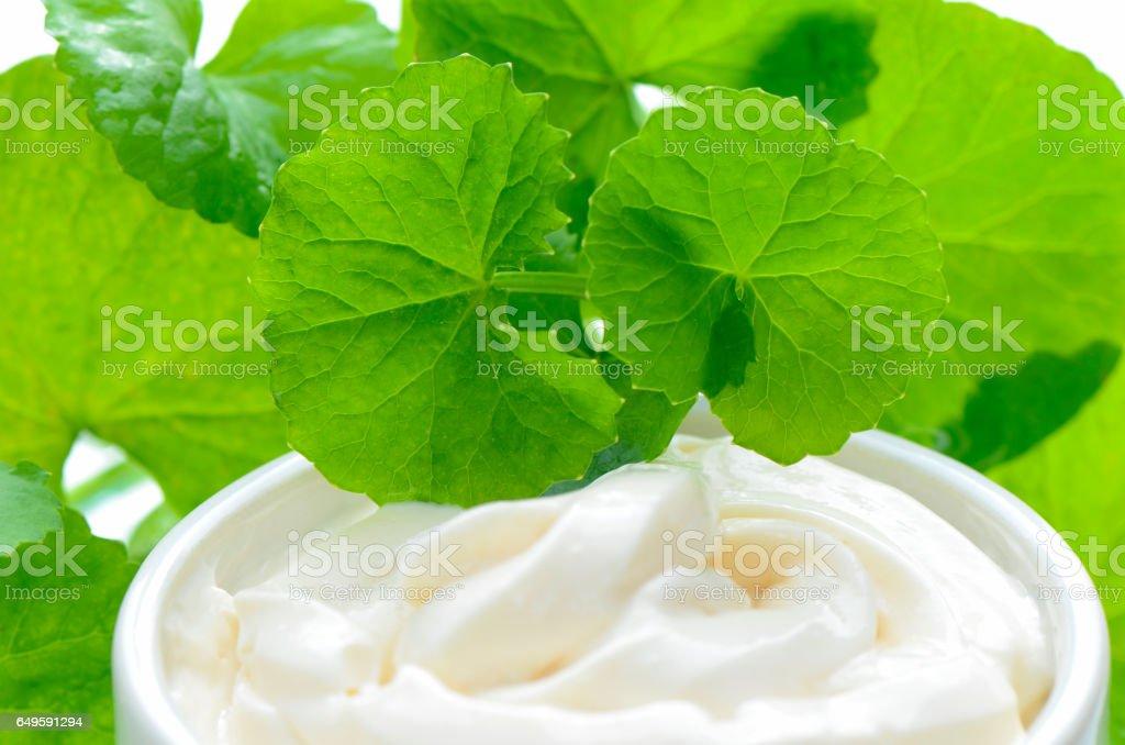 Gotu-Kola anti-aging skin care product. stock photo