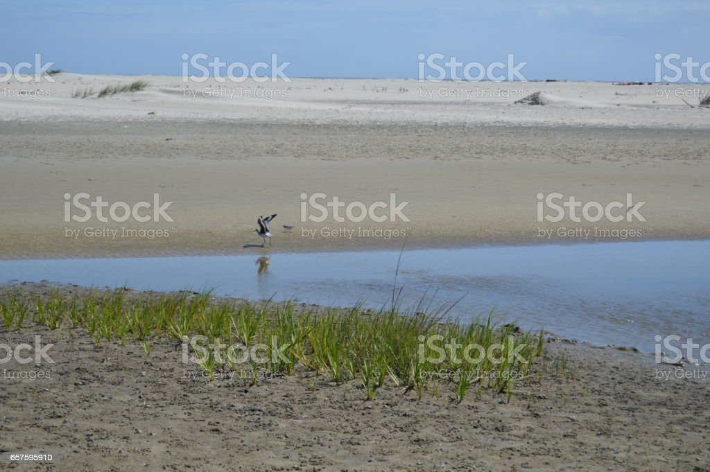 Gould's Inlet bird St. Simons Island GA stock photo