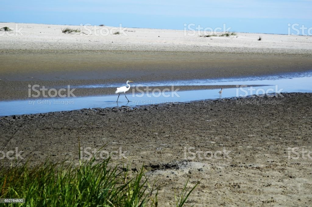 Gould's Inlet Egret St. Simons Island stock photo
