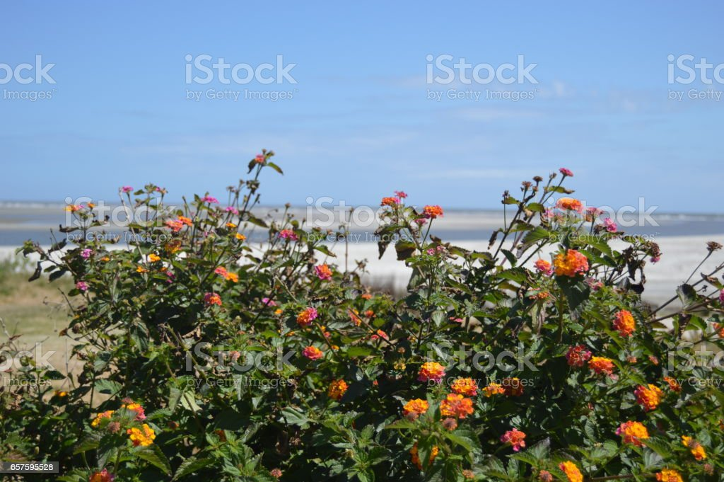 Gould's Inlet Flowers St. Simons Island GA stock photo