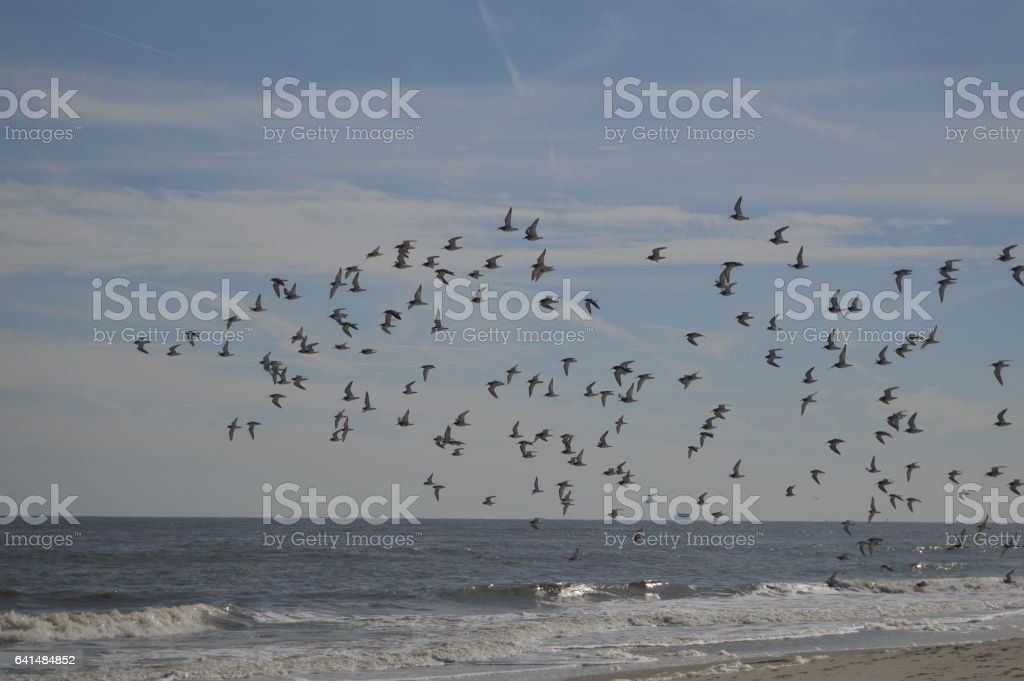 Gould's inlet shore birds St. Simons Island stock photo