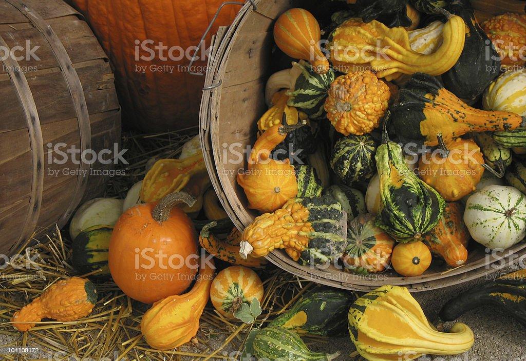 Gourdian Variety stock photo