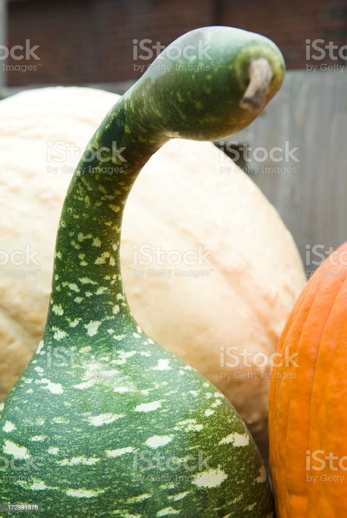 Gourds and pumpkins - II royalty-free stock photo