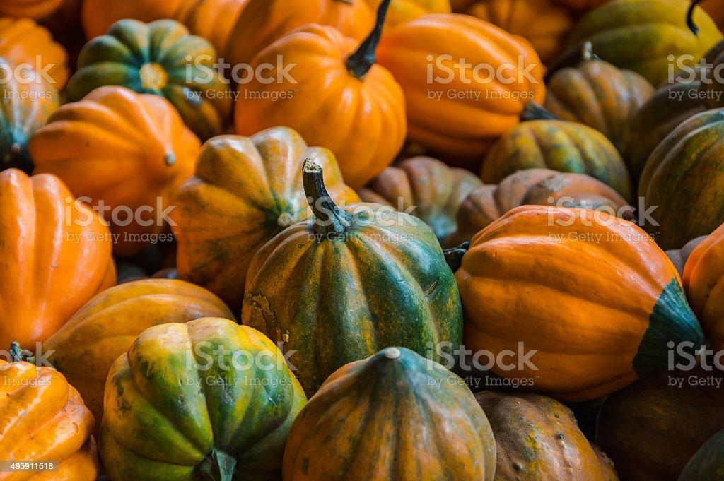 Gourds stock photo